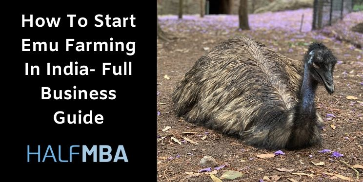 How To Start Emu Farming In India- Full Business Guide