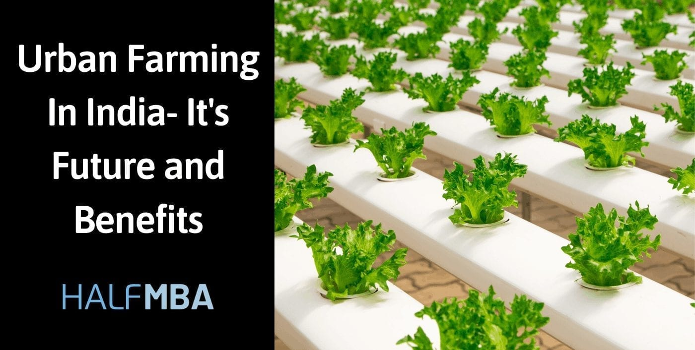 Urban Farming In India- It's Future and Benefits 2